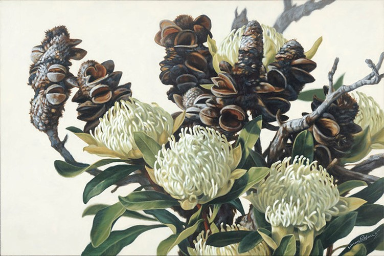 Bush 1 Waratah and Banksia 1915